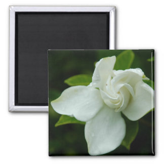 Southern Belle Square Magnet