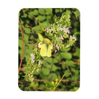 Southern Dogface Butterfly Magnet