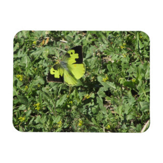 Southern Dogface Butterfly Rectangle Magnet