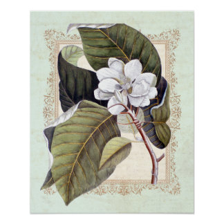 Southern Elegance Vintage Botanical Magnolia Poster