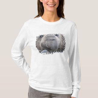 Southern Elephant Seal Mirounga leonina) 2 T-Shirt