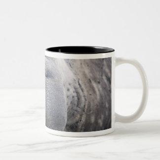 Southern Elephant Seal Mirounga leonina) 2 Two-Tone Coffee Mug