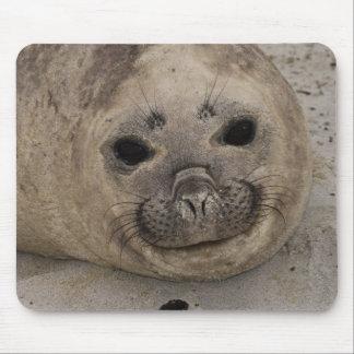 Southern Elephant Seal Mirounga leonina) 3 Mouse Mat