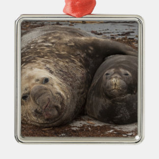 Southern Elephant Seals Mirounga leonina) Silver-Colored Square Decoration