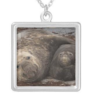 Southern Elephant Seals Mirounga leonina) Silver Plated Necklace