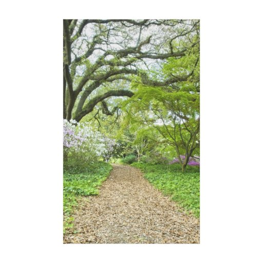 Southern Garden Path Gallery Wrapped Canvas