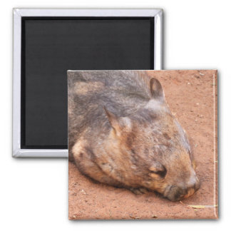Southern Hairy-Nosed Wombat Square Magnet