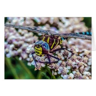 Southern Hawker (Aeshna cyanea) Male Dragonfly Card