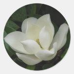 Southern Magnolia Bloom Classic Round Sticker
