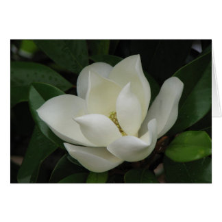 Southern Magnolia Bloom Greeting Card