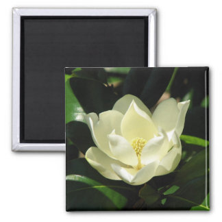 Southern Magnolia Square Magnet