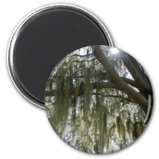 Southern Moss Refrigerator Magnet