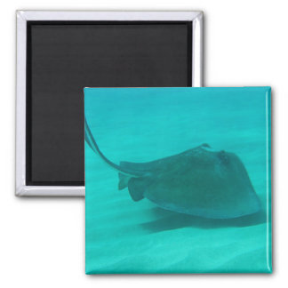Southern Stingray 2 Square Magnet