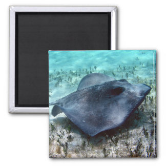 Southern Stingray Square Magnet