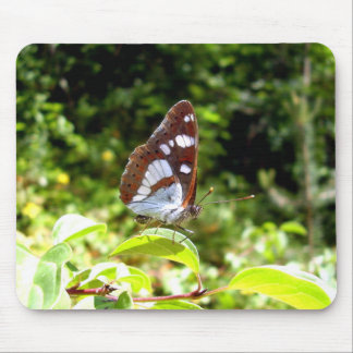 Southern White Admiral Butterfly Mouse Mat