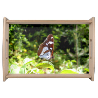 Southern White Admiral Butterfly Serving Tray
