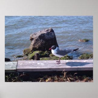 Southport, North Carolina - Seagull Print