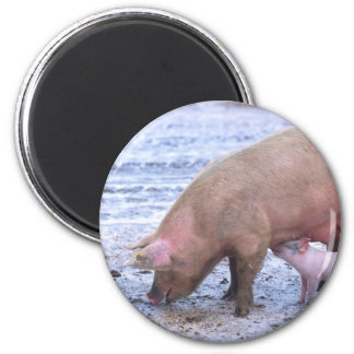 Sow and piglet 6 cm round magnet