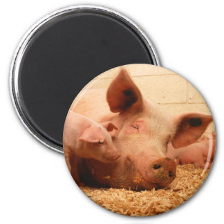 Sow and Piglets 6 Cm Round Magnet