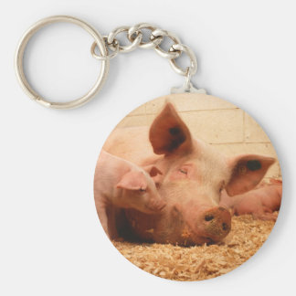 Sow and Piglets Basic Round Button Key Ring