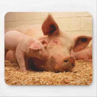 Sow and Piglets Mouse Pad