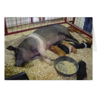 Sow and Piglets Notecard Note Card