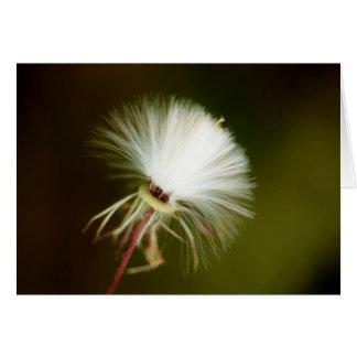Sow Thistle Seed Pod Greeting Card