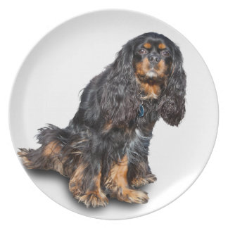 SPANIEL 2 PARTY PLATE
