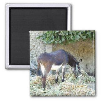 Spanish donkey photograph magnet