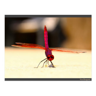 Spanish dragonfly at the pool - postcard