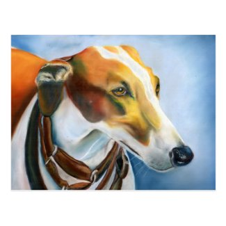 Spanish Greyhound postcard (a501) title=