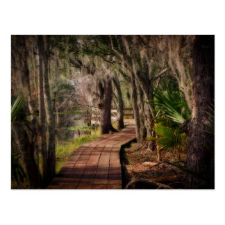 Spanish Moss and Louisiana Swamps Postcard