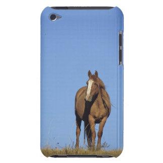 Spanish mustang (Equus caballus), wild horse, iPod Touch Cases