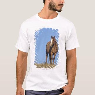 Spanish mustang (Equus caballus), wild horse, T-Shirt