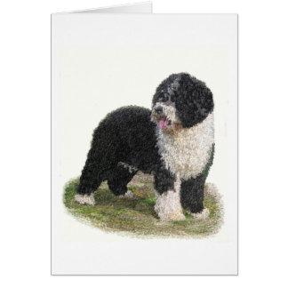 Spanish Water Dog Cards