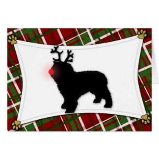 Spanish Water Dog Reindeer Christmas Card