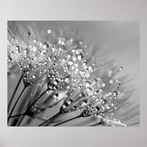 Sparkling Dew Dandelion Monochrome Background Poster