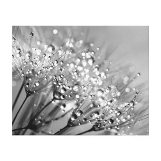 Sparkling Dew Dandelion Silver Gray Background Canvas Print