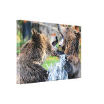 Sparring Grizzly Bears Stretched Canvas Prints
