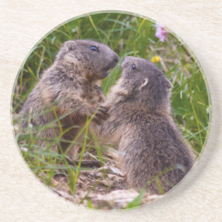 Sparring Partners Coaster