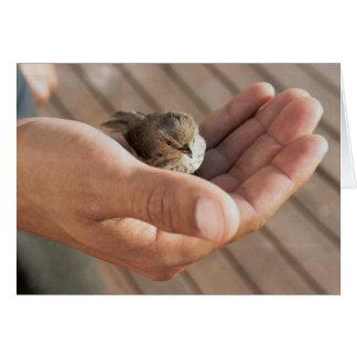 Sparrow bird Eye on the sparrow greeting card