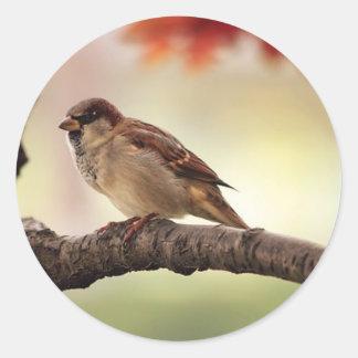 Sparrow Bird in Tree Stickers