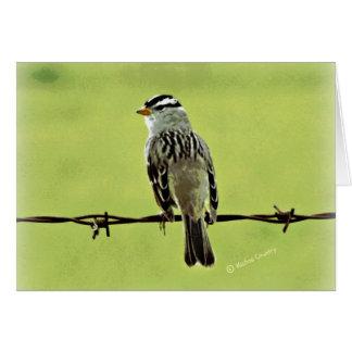"""Sparrow """"Bird on a Wire"""" Card"""