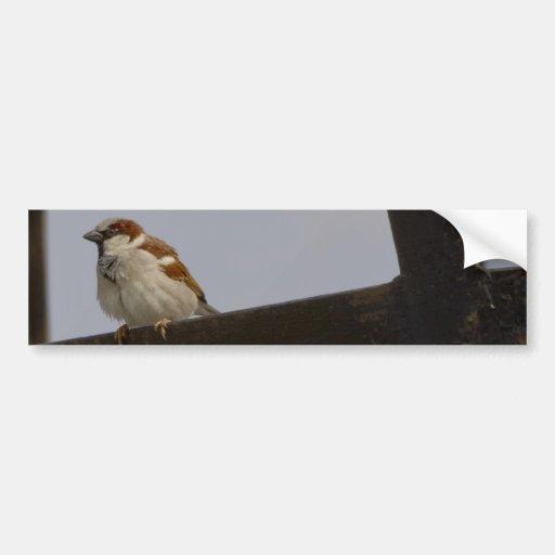 Sparrow Bumper Stickers