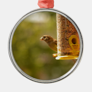 Sparrow eating christmas ornament