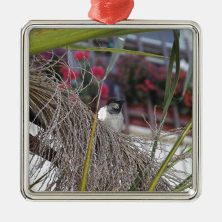 Sparrow in southern Spain Silver-Colored Square Decoration