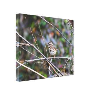 Sparrow in the Brush 2 Gallery Wrapped Canvas