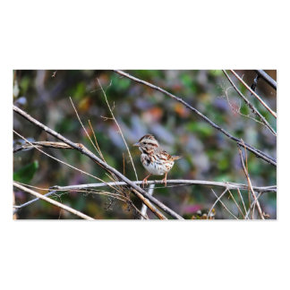 Sparrow in the Brush 2 Pack Of Standard Business Cards