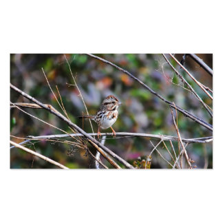 Sparrow in the Brush Pack Of Standard Business Cards