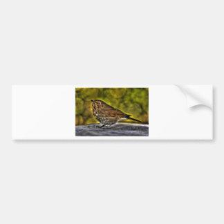 Sparrow of my dreams bumper sticker